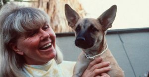 Doris Day († 97): Vos Animaux héritiers de 180 Millions menace maintenant un Erbstreit?