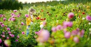 Pour l'Homme et l'Animal: La prairie de fleurs sauvages a besoin d'un peu de Patience