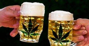 Bière de chanvre: une Bière avec le THC high faire? L'expert met en garde contre Effet psychologique