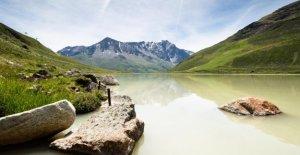 La nature Expédition dans le Pitztal: À la Recherche de la Zauberbaum des Alpes