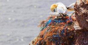 Les déchets en plastique: Pourquoi les Chercheurs, les Oiseaux en Plastique de laisser couver