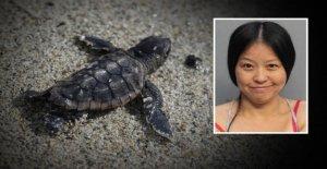 Miami: Femme piétine sur des Œufs de Tortues de mer autour de l'Arrestation!