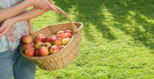 Alimentation: Est-régional de Fruits est vraiment le mieux pour le Climat?