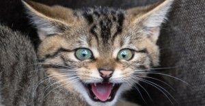 Alltagsfrage - Peut mon Chat le don de Sang?