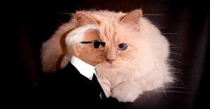 Karl Lagerfeld: Où est son Favori Choupette?