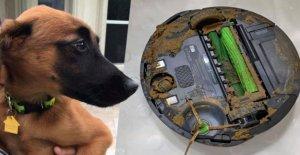 Robot aspirateur contre merde de chien – ainsi en est-il ensuite, à partir de