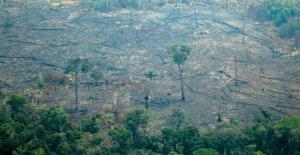 Destructeur Amazone des Incendies qui - Peut de la Forêt repousse?