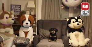 Les Chouchous de la PHOTO de Lecteur: Magnifique plüschige Animaux de compagnie