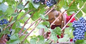 Les vins de qualité de la Relève: de Ces domaines, vous devriez Vous en souvenir!!!