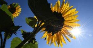 Météo du jour: Dimanche Super Soleil Vadrouille dans la moitié de l'Allemagne