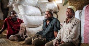 Gewürzanbau à Zanzibar: Où la Bio-Poivre pousse
